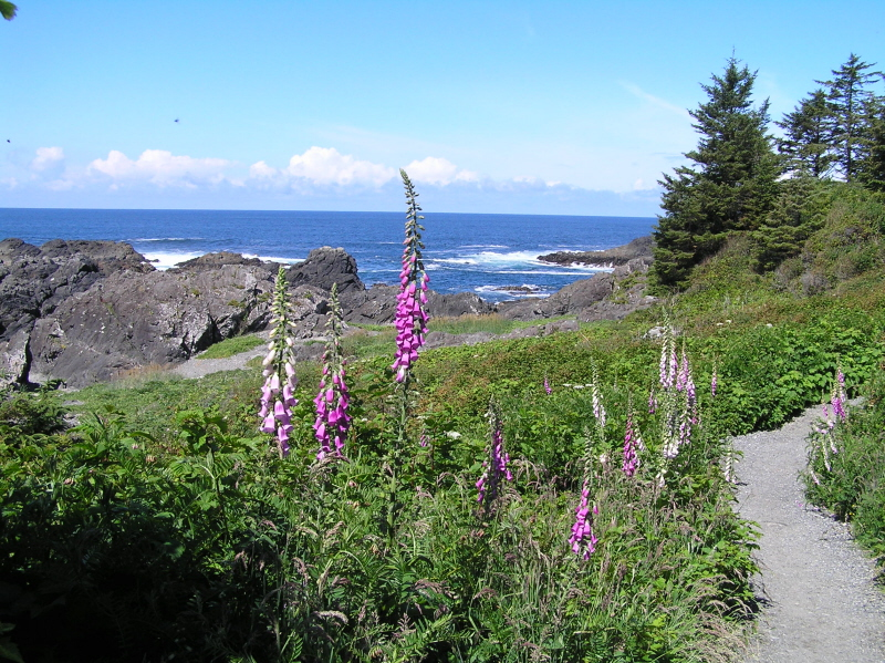 Rainforest Nature tours to the West Coast of Vancouver Island