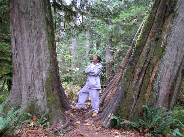Western Red Cedars in Cathedral Grove