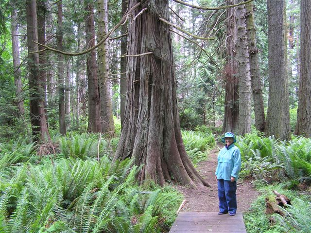Vancouver Island Nature and Artisan Tours