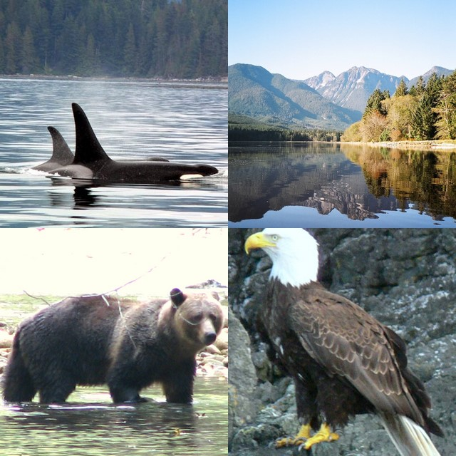 Guided Vancouver Island  Nature and Marine Wildlife Tours